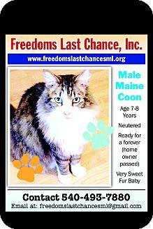 Maine Coon Cat for adoption in wirtz, Virginia - Wadol