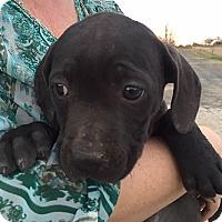 Adopt A Pet :: Jersey - Somers, CT