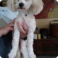 Adopt A Pet :: Lorna - Simi Valley, CA