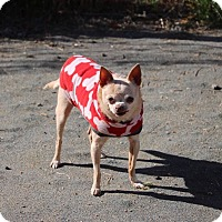 Adopt A Pet :: Kitty - Creston, CA