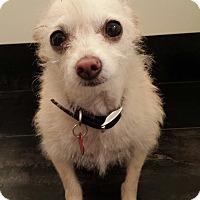 Adopt A Pet :: Yuki - Encino, CA