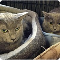 Adopt A Pet :: Moses and Mufasa - Milford, MA