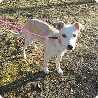 Adopt A Pet :: Azylea - West Warwick, RI