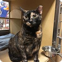 Adopt A Pet :: Asia - PetSmart - Kalamazoo, MI