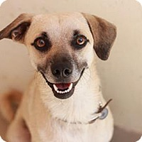 Adopt A Pet :: XANDER - Kyle, TX