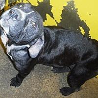 Adopt A Pet :: Kiska - Redding, CA