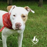 Adopt A Pet :: Bart - Mt Pleasant, MI