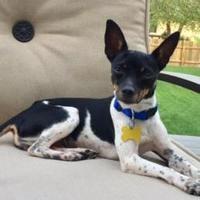 Adopt A Pet :: Delta - DeSoto, IA