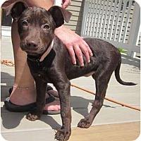 Adopt A Pet :: Alecia - In CT! (video) - Adamsville, TN