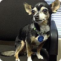 Adopt A Pet :: RIN - AUSTIN, TX