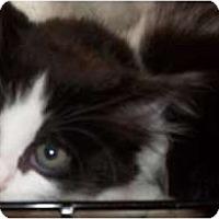 Adopt A Pet :: Lea - Acme, PA