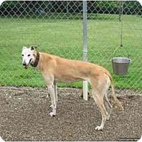 Adopt A Pet :: Jenny (Joyful Jenny) - Chagrin Falls, OH
