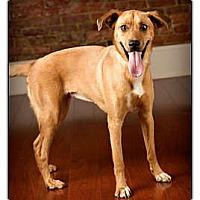 Adopt A Pet :: Pepper - Owensboro, KY
