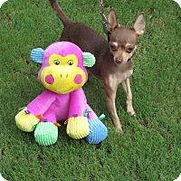 Adopt A Pet :: Cricket - Scottsdale, AZ