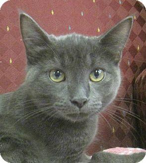 Domestic Shorthair Kitten for adoption in Lloydminster, Alberta - Ralph