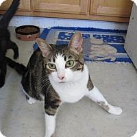 Adopt A Pet :: Sara - San Ramon, CA