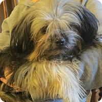 Adopt A Pet :: April - Salem, NH
