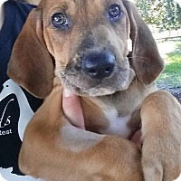 Adopt A Pet :: Connor - Gainesville, FL