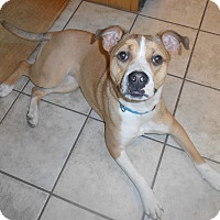 Adopt A Pet :: Bailey - North Jackson, OH