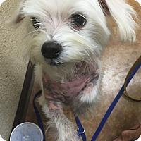 Adopt A Pet :: Snoop Dog - Flower Mound, TX