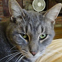 Adopt A Pet :: Mighty Mouse - St. Johnsville, NY