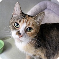 Adopt A Pet :: Ororo Monroe - Chicago, IL