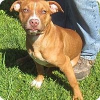 Terrier (Unknown Type, Medium) Mix Puppy for adoption in Reeds Spring, Missouri - Karma