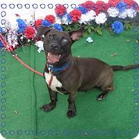 Dachshund Mix Dog for adoption in Marietta, Georgia - RUGBY