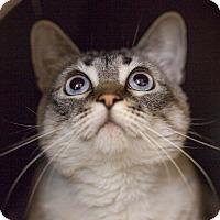Adopt A Pet :: Monique - Houston, TX