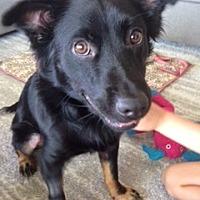 Adopt A Pet :: Rupert - Davie, FL