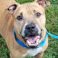 Adopt A Pet :: Curtis - Twinsburg, OH