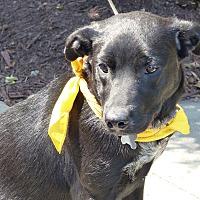 Adopt A Pet :: Daphne and Audrey - richmond, VA