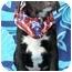 Photo 3 - Basset Hound/Labrador Retriever Mix Puppy for adoption in Sacramento, California - Charlie boy