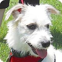 Adopt A Pet :: Jefferson - Kingwood, TX
