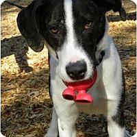 Adopt A Pet :: BANJO - Windham, NH