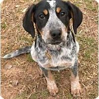 Adopt A Pet :: Marley - Fulton, MD