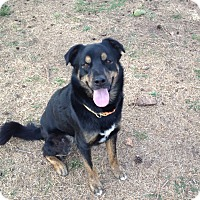 Australian Shepherd Mix Dog for adoption in Manhattan, Kansas - Bird