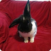 Adopt A Pet :: Lucy - Watauga, TX