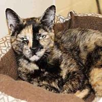 Adopt A Pet :: BANANA2 - Hampton Bays, NY