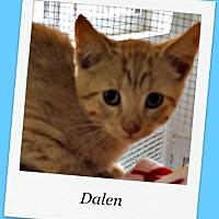 Adopt A Pet :: Dalen - Tombstone, AZ