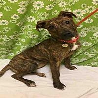 Adopt A Pet :: *LAURIE - Upper Marlboro, MD