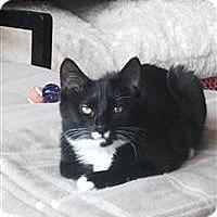 Adopt A Pet :: Hermione - Alexandria, VA