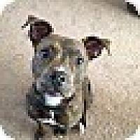 Adopt A Pet :: Happy - Garwood, NJ