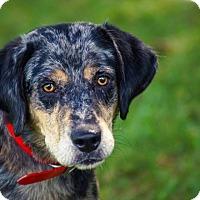 Adopt A Pet :: Luna*ADOPTED* - Chicago, IL