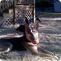 Adopt A Pet :: Klaus - Green Cove Springs, FL
