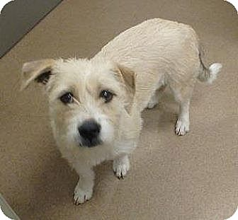 Terrier (Unknown Type, Medium) Mix Dog for adoption in Las Vegas, Nevada - Nala