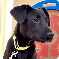 Adopt A Pet :: *Petunia - PENDING - Westport, CT
