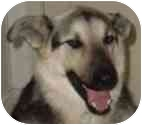 German Shepherd Dog/German Shepherd Dog Mix Dog for adoption in Dripping Springs, Texas - Shep