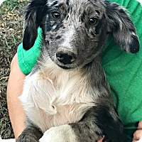 Adopt A Pet :: Melbourne - Starkville, MS