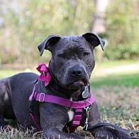 Adopt A Pet :: Flora - Gainesville, FL